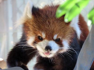 大牟田市動物園&福岡市動物園 そらちゃん、レン君、まいちゃん、ノゾム君、マリモちゃん・・・成長中のレイ君以外は心配の募る面々に会いに