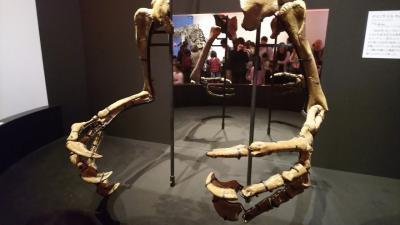 国立科学博物館 恐竜博2019