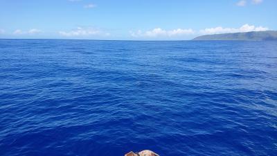 秋の女子旅 in Hawaii ② 2日目:イルカに会いに行く!