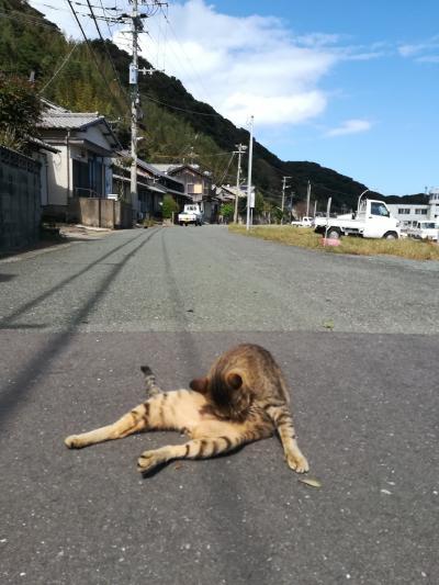 2日目 博多猫の島~天神屋台体験