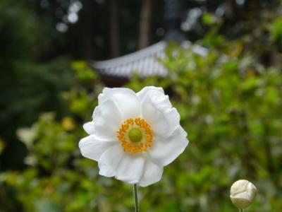 奈良坂・当尾・山城の見仏記(見花記も兼ねています)