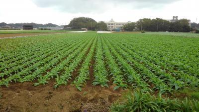 三浦半島がこれから緑に染まる
