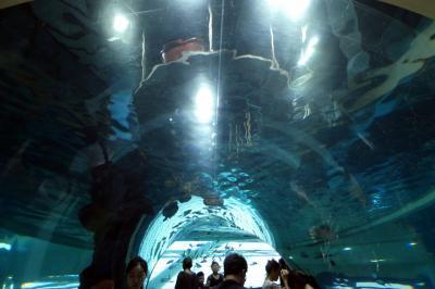 お盆休みの釜山3泊 車チャーター観光 国立海洋博物館(クンニプヘヤンパンムルグァン)その3