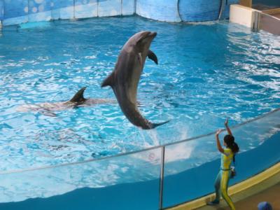 片瀬江ノ島「新江ノ島水族館」を見てきました