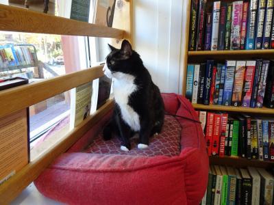 シアトル一人旅:地下廃墟とドリームリフターと猫のいる古書店