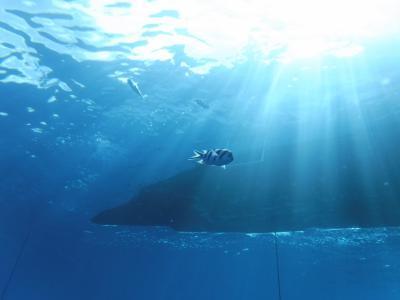 1年ぶりのダイビングin水納島