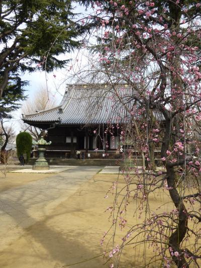 入谷~上野 のんびり散歩 2 寛永寺、そしてアナウサギ~動物園