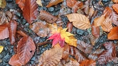 ちょっとだけ秋の戸隠