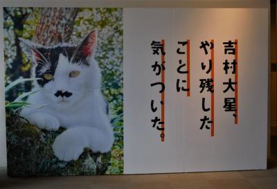 2019年10月 山口県 防府愛情フリマーケットと色鉛筆画家、吉村大星展
