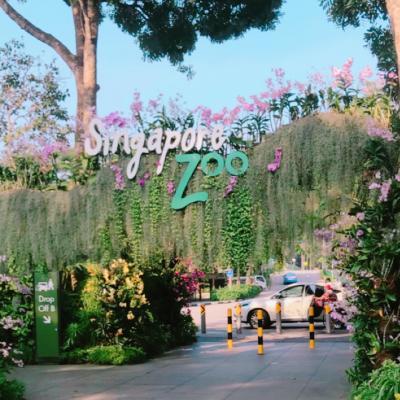 動物園!シンガポールへ2歳子連れ旅~家族旅行