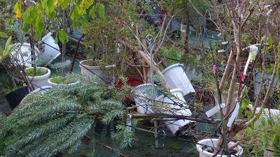 早朝散歩 台風一過の安倉上池へ日の出を拝みに 下巻。