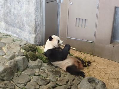 4歳子連れ・初めてパンダに会う!南紀白浜☆2019.10