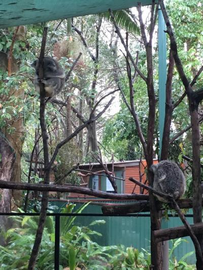 コアラと土ボタル