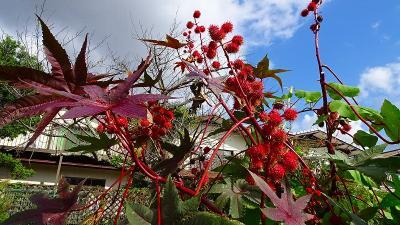 1ヶ月半ぶりの西武庫公園花壇へ その3。
