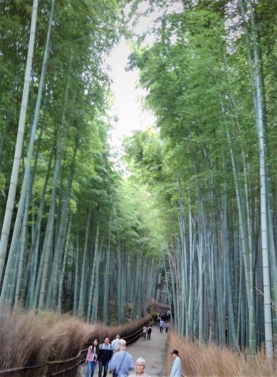 友人の導きで京都旅をする