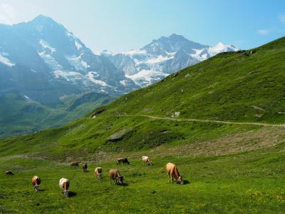 スイスで歩く!⑨~絶景・鉄道・ハイキング・ホテル・グルメ~(9泊11日)