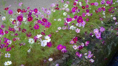 1ヶ月半ぶりの西武庫公園花壇へ その8完。