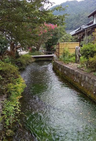 梅花藻咲く 水清き醒井宿