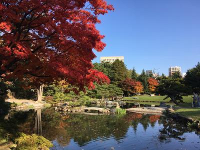 秋、中島公園の紅葉