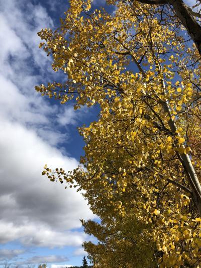 紅葉が始まる頃のホワイトホース