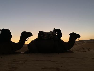 モロッコ旅10日間③フェズ~メルズーガ、サハラ編