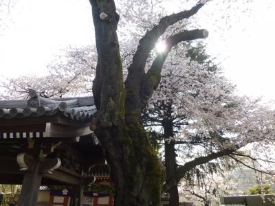 桜見散歩 石灯篭に十二支が走る! in 高円寺~中野~新井薬師