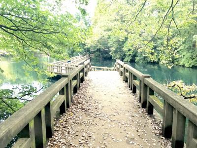 井の頭公園*撮影散歩とタイ料理