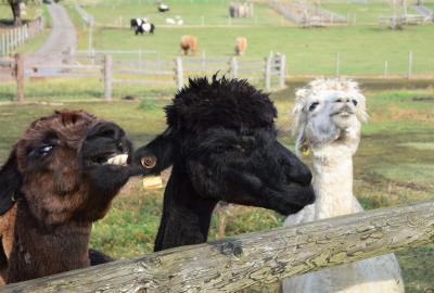 台風15号の被害にも負けず営業中!大勢の来場者で盛り上がっていたマザー牧場で大自然とかわいい動物達にたくさん触れ合ってきました!