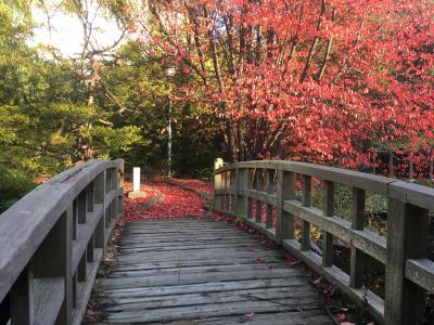 秋、道庁の紅葉