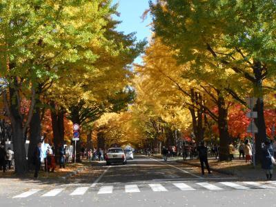 2年ぶりの北海道大学イチョウ並木と紅葉 2019.10
