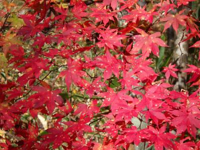 紅葉狩りと温泉