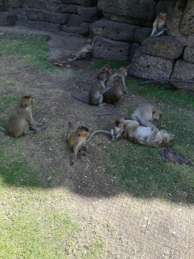バンコクから日帰りで猿の街 ロッブリーへ(遺跡巡り)