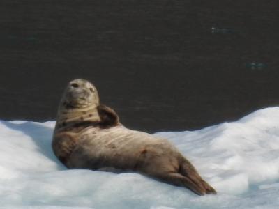 自然と野生動物とグルメ!アラスカクルーズ8日間(ノルウェージャン・ジュエル)⑦