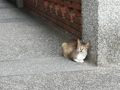 【2019】台湾で猫に遊んでもらう弾丸旅行