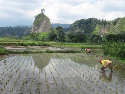 インドネシア スマトラ島 ブキティンギ