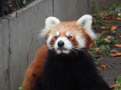 二度目の北海道旅行・北海道18景巡り・・その⑦旭山動物園~旭川(星野リゾートOMO7)