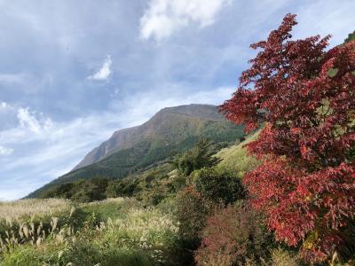 マダムのランチバイキング&温泉&くじゅう花公園&池山水源inくじゅう