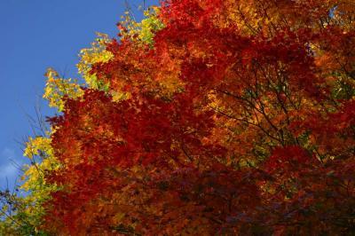 温泉と紅葉を眺めに東北へ(第3日目 酸ヶ湯温泉)