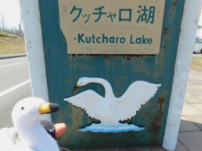「何が起きるか?」を分かっているハクチョウさんたち(クッチャロ湖・お昼編)!