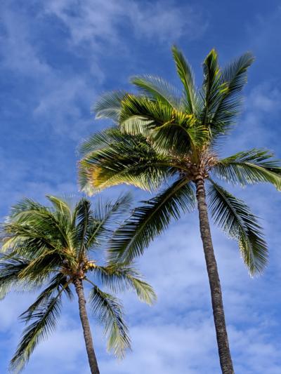 パワーを感じたハワイ島7日間①