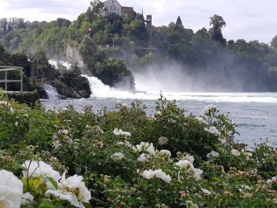 決定版‼スイス8日間(8)ライン滝からザンクトガレン、そして帰国の途へ