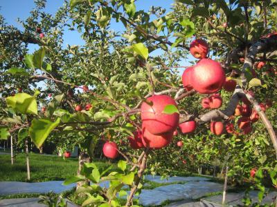 東北・りんごと紅葉と温泉巡り(2日目)