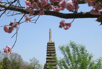 2018春、関西の花のお寺巡り(9/16):4月10日(9):般若寺(4):本堂、鐘楼、山吹、白山吹、三十三観音石像