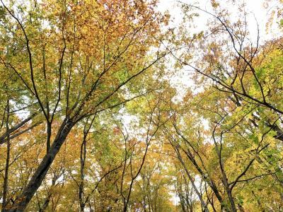 201910-08_青森での紅葉狩り 世界遺産白神山地/ Shirakami-sanchi<AOMORI>