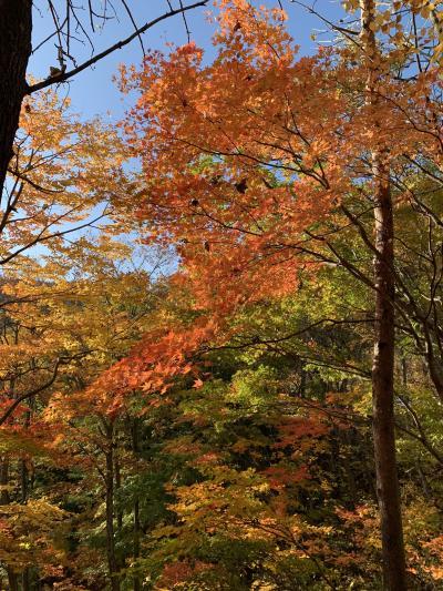201910-09_岩手での紅葉狩り 安比高原 松川渓谷/ Appi, Matsukawa<IWATE>