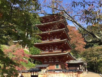 奈良 源氏物語や枕草子に出てくる長谷寺と大化の改新ゆかりの談山神社