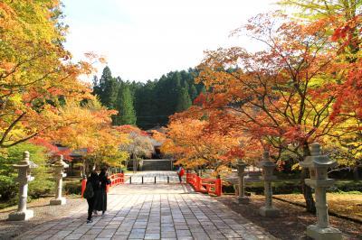 高野山の紅葉 色づきはじめ