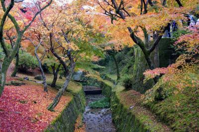 定番スポットを巡る京都・紅葉の旅 ②   (東福寺・鴨川)