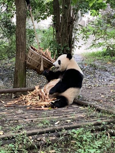 パンダと激辛ごはん!アラサー女子の一人旅①