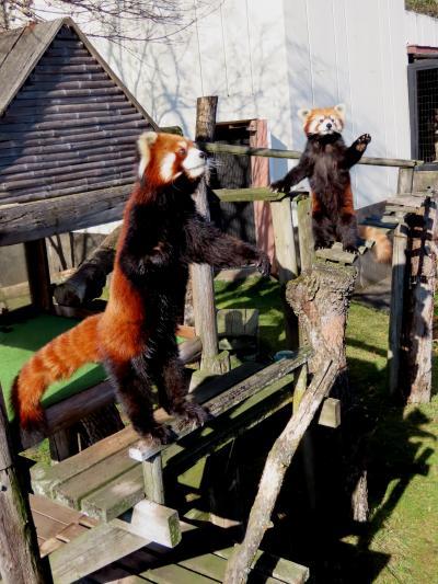 釧路市動物園 今日はおとなしめだね(笑)伊豆大島からやってきた超絶おもろ嫁アスナロちゃんに会いに